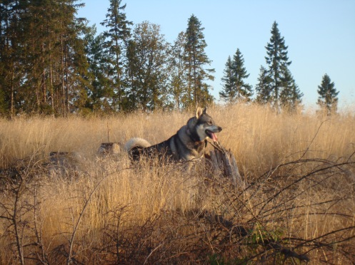 Scouting for moose